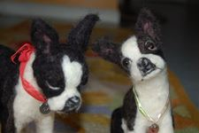 Boston Terriers Maggie & Max